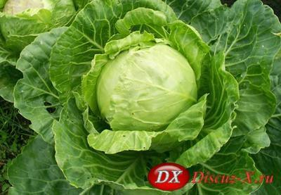 Выращивание овощей - советы