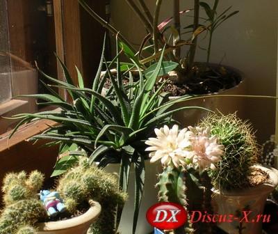 Комнатные растения: уход зимой.