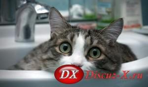 К чему нужно приучать домашнего городского котенка?